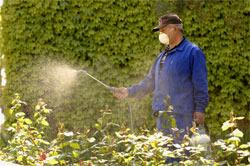 Entretien des jardins